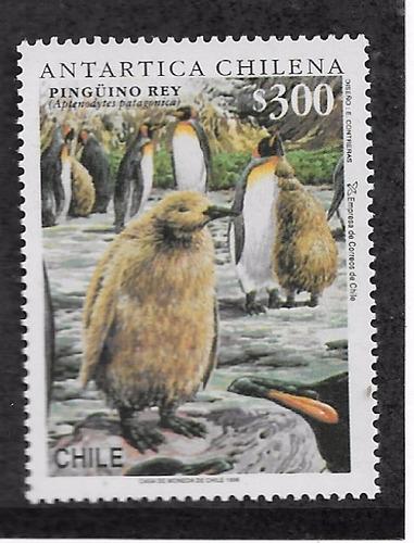 z   sellos antartica chilena mas block