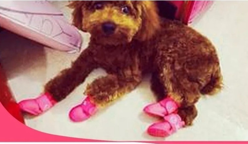 zapatos para perritos tipo lluvia diferentes tallas.