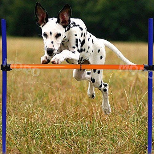zoic mascotas perros juegos al aire libre de la agilidad ej