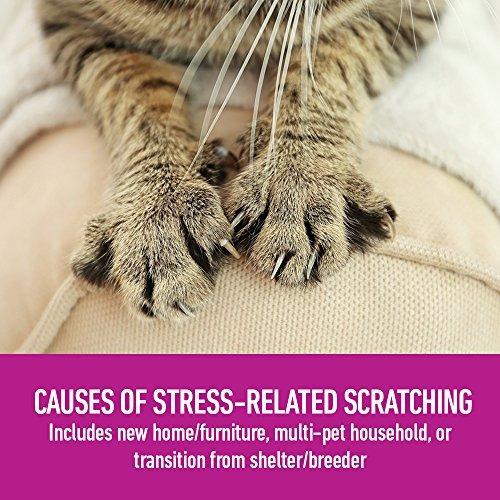 zona de confort con spray feliway para gatos