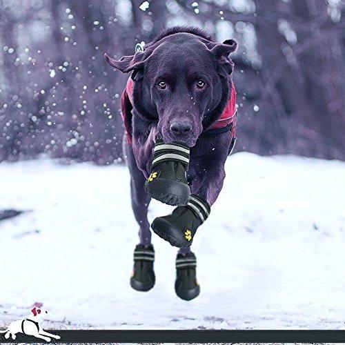 zona de fantástico perro labrador retriever botas para ca