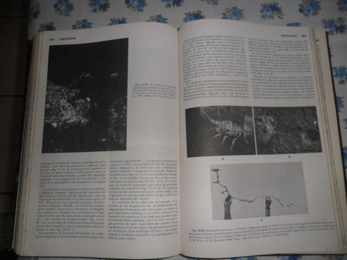 zoologia de los invertebrados robert d. barnes